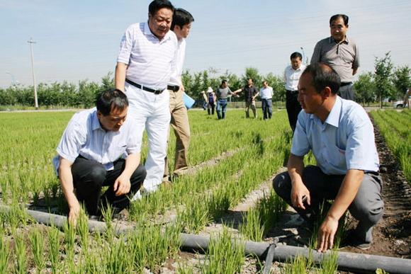 中国节水灌溉网,节水节电节粮手抄报